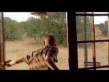 Мои африканские приключения / Min søsters børn i Afrika (Трейлер)